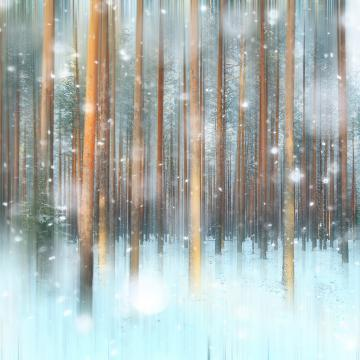 Custom Murals Snowy Pines Wallpaper 174479552