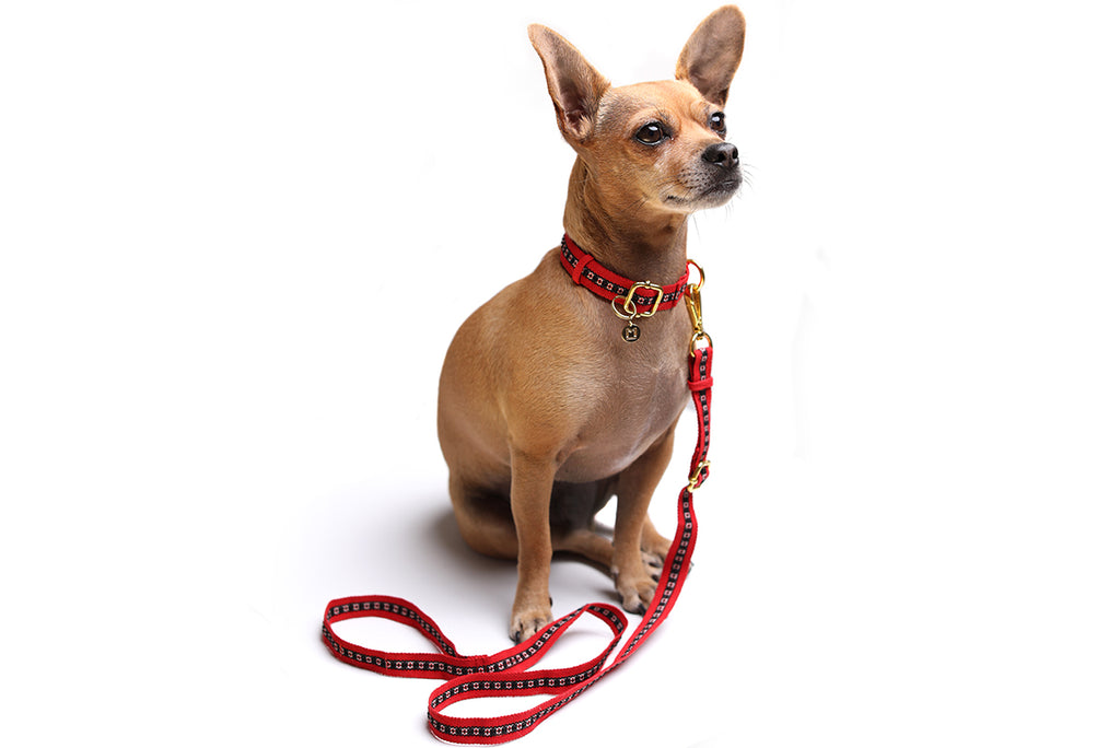 Casa de Micho Woven Leash Small