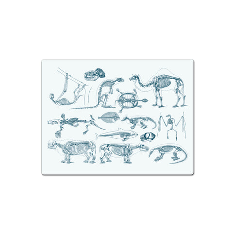 Vintage Animal Skeleton - Placemat - Ai Printing