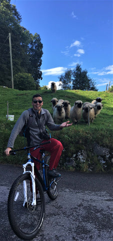 biking next to sheep in switzerland