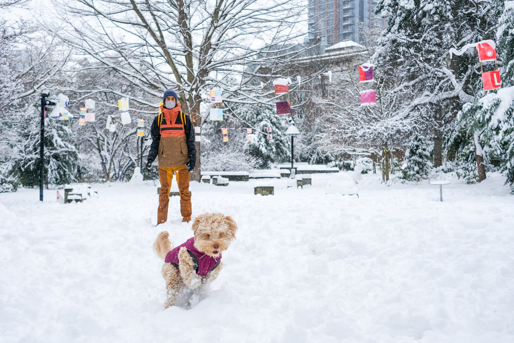 What Gear to Bring on Winter Adventures With Your Dog