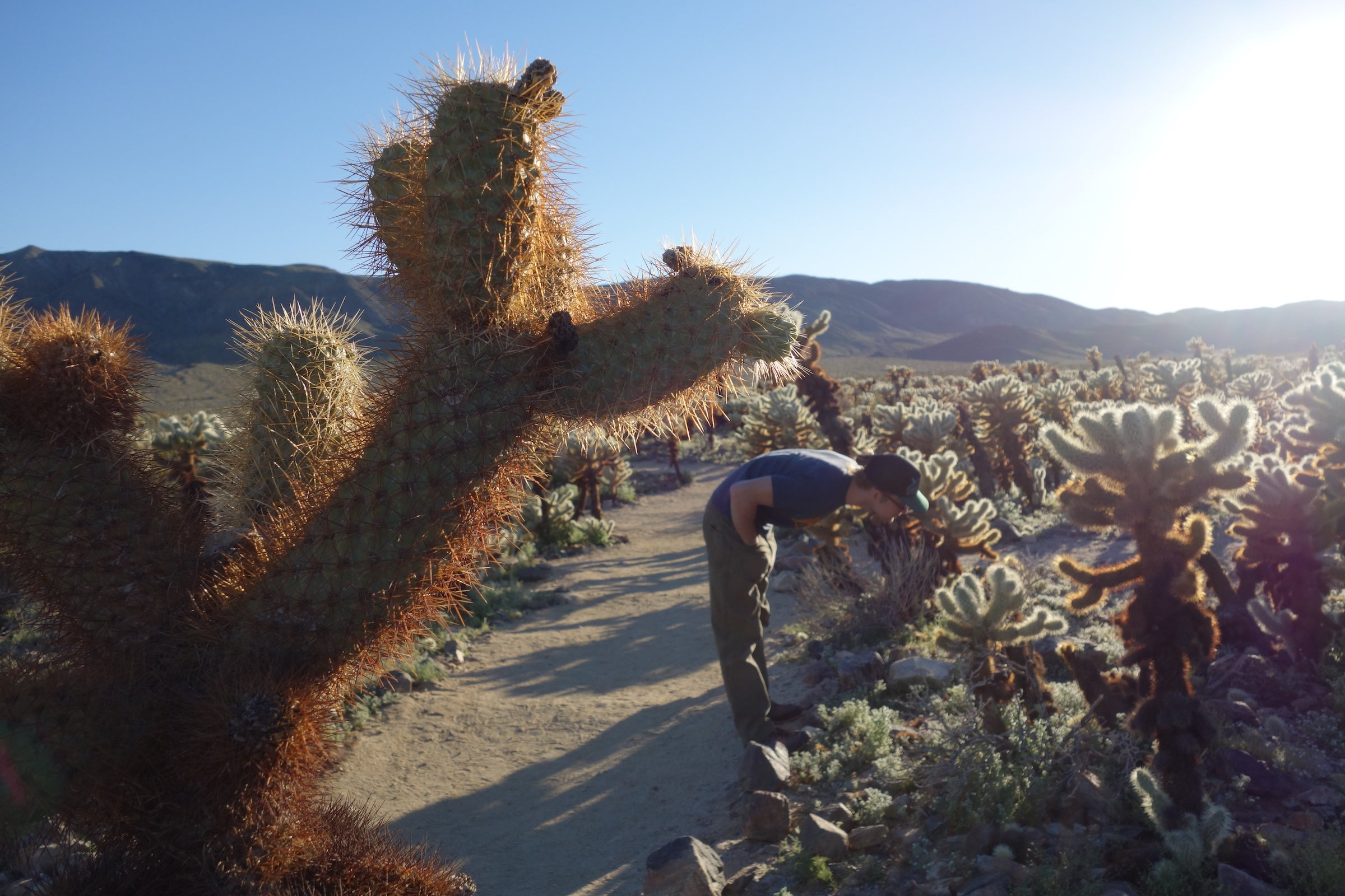 observing cacti in joshua tree national park