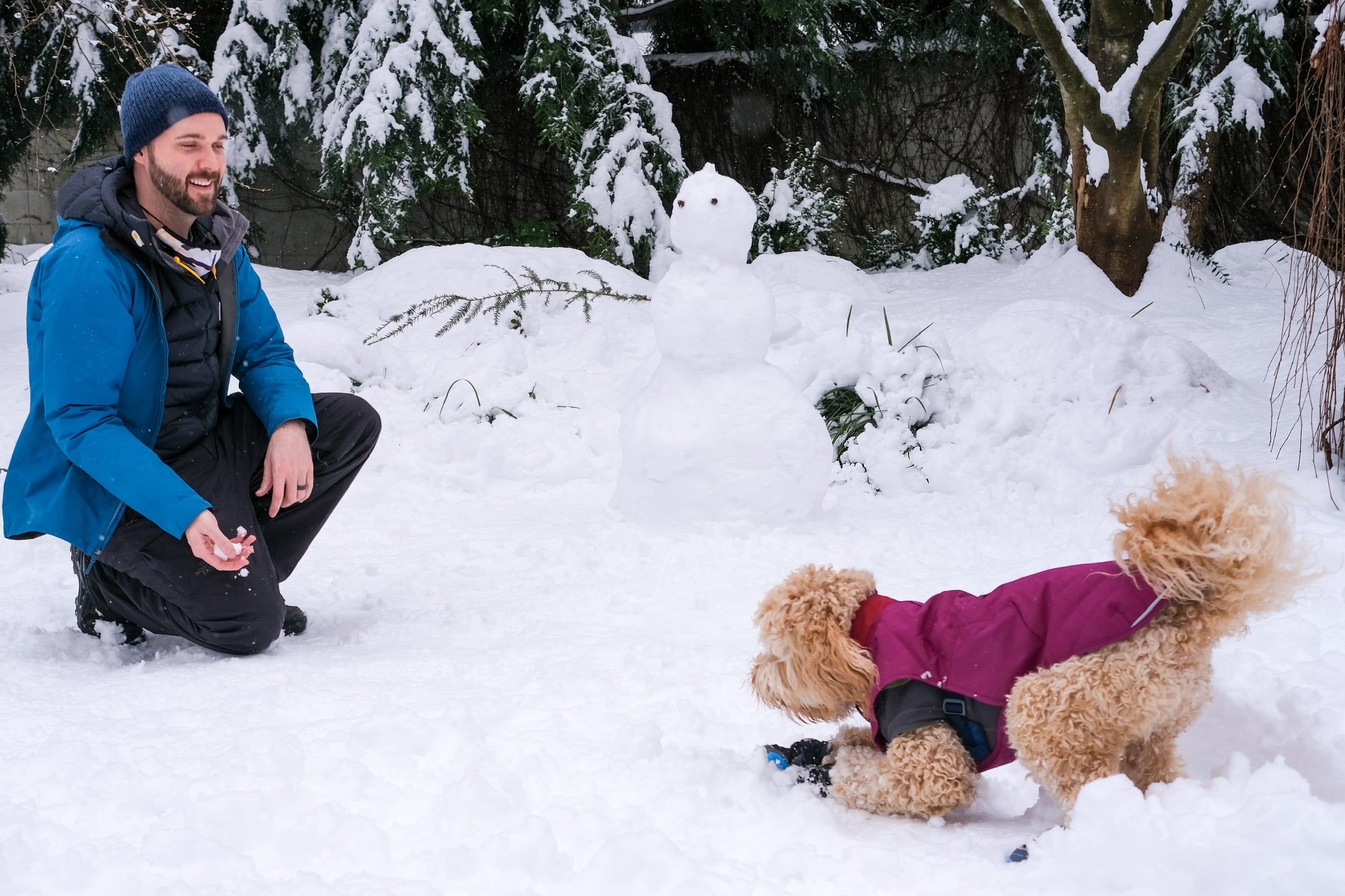 What Gear to Bring on Winter Adventures With Your Dog - Dog play in snow