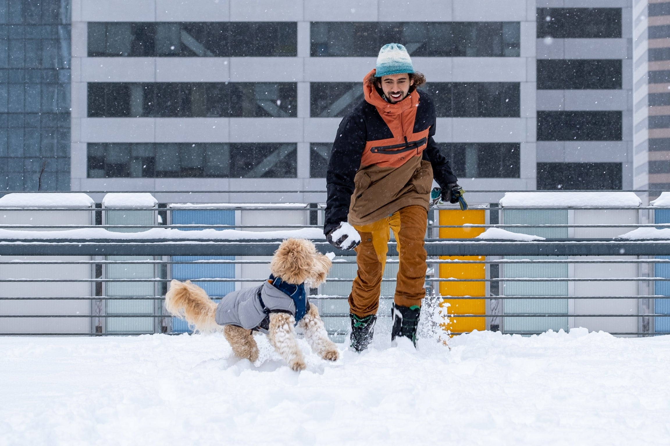 What Gear to Bring on Winter Adventures With Your Dog - Dog playing in snow