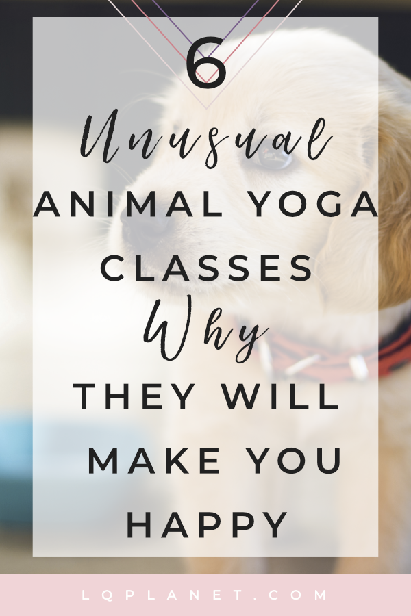 6 Unusual Animal Yoga Classes & Why They Will Make You Happy