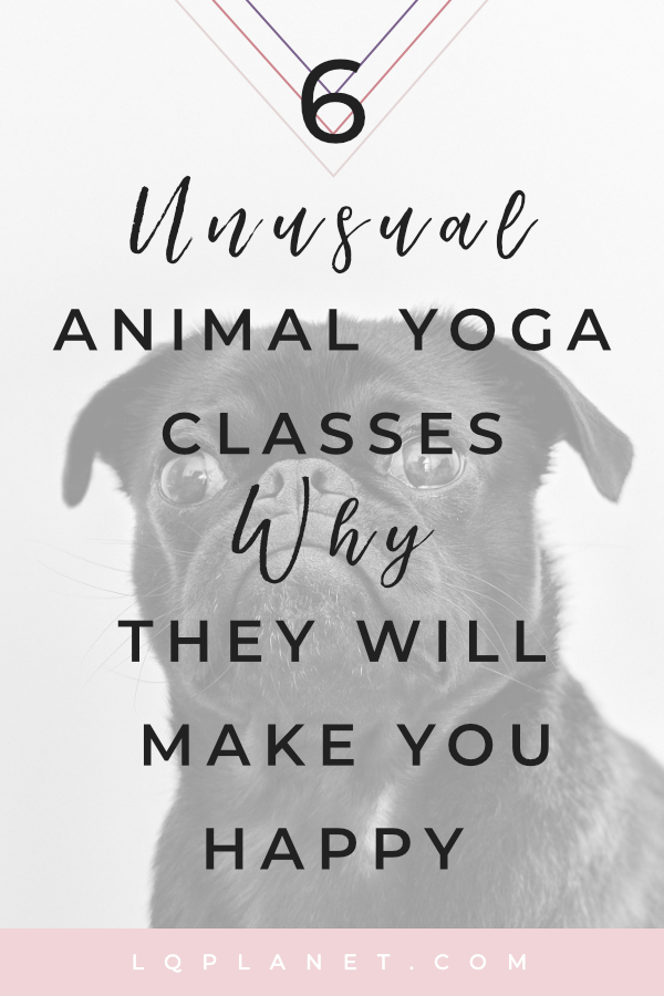 Six unusual animal yoga classes and why they will make you happy. Yoga inspiration for everyone. Whether you are looking for yoga for beginners or advanced yoga there will be yoga benefits for everyone in these animal yoga classes. Yoga lifestyle is also about connecting with nature and all mother nature can give us. #yoga #yogaforbeginners #yogainspiration #animals #baby animals #cuteanimals #yogalifestyle #yogalife #chakra #life #selflove #selfcare #exercisemotivation. Photo by Charles Deluvio