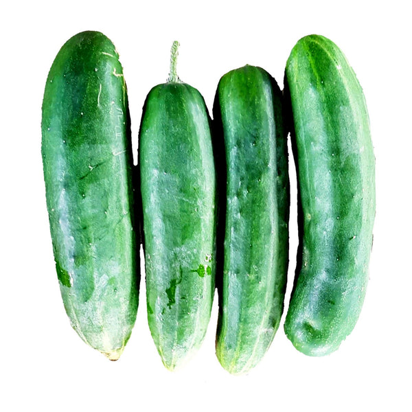 Cucumber (per 1kg) Homegrown Organics (The Home of Purple Corn) : No Minimum Order