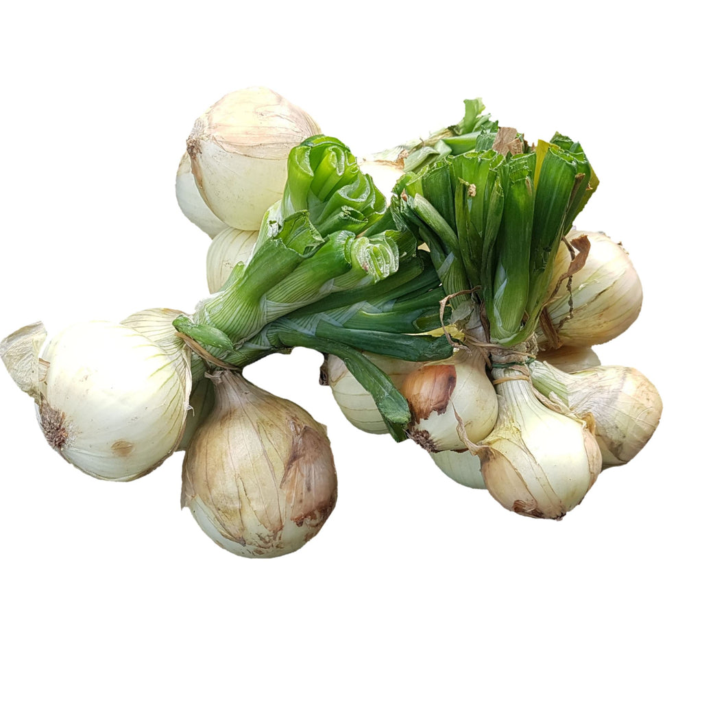 White Onions (Per 250g) Homegrown Organics (The Home of Purple Corn) : No Minimum Order