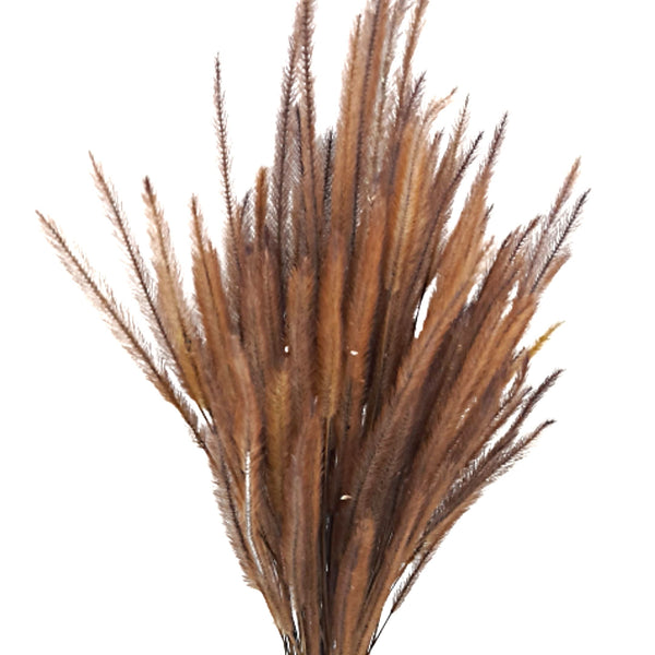Rustic Grass Tails,Dried Flowers for Home Decor (per bunch) Homegrown: Fresh Food, Groceries, Plants and More!