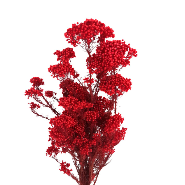 Red Couscous Flower, Dried Flower for Home Decor, 30-40g (per bunch) Homegrown: Fresh Food, Groceries, Plants and More!