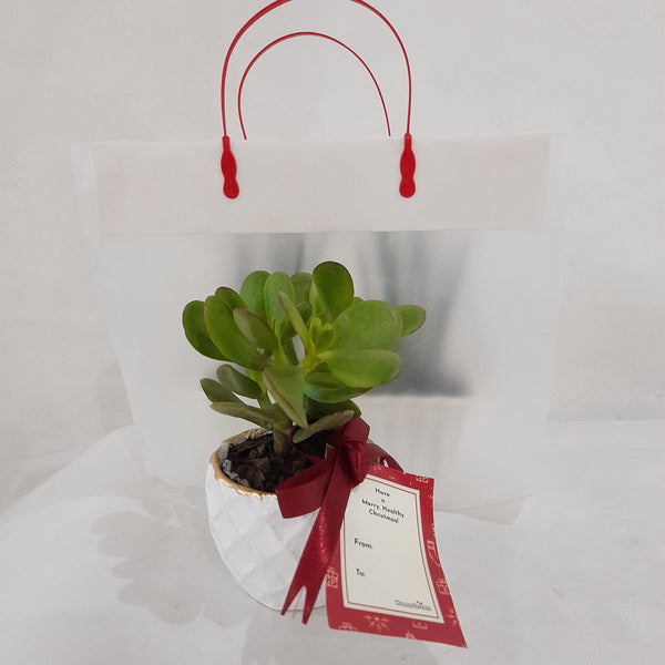 Promo: 5+1 FREE, Jade Plant Gift, Indoor (Total of 6pcs) Homegrown: Fresh Food, Groceries, Plants and More!