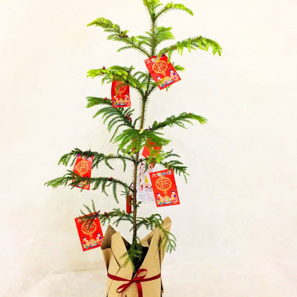 2021 Prosperity Tree,1ft up,Ready for gifting (per piece) Homegrown: Fresh Food, Groceries, Plants and More!