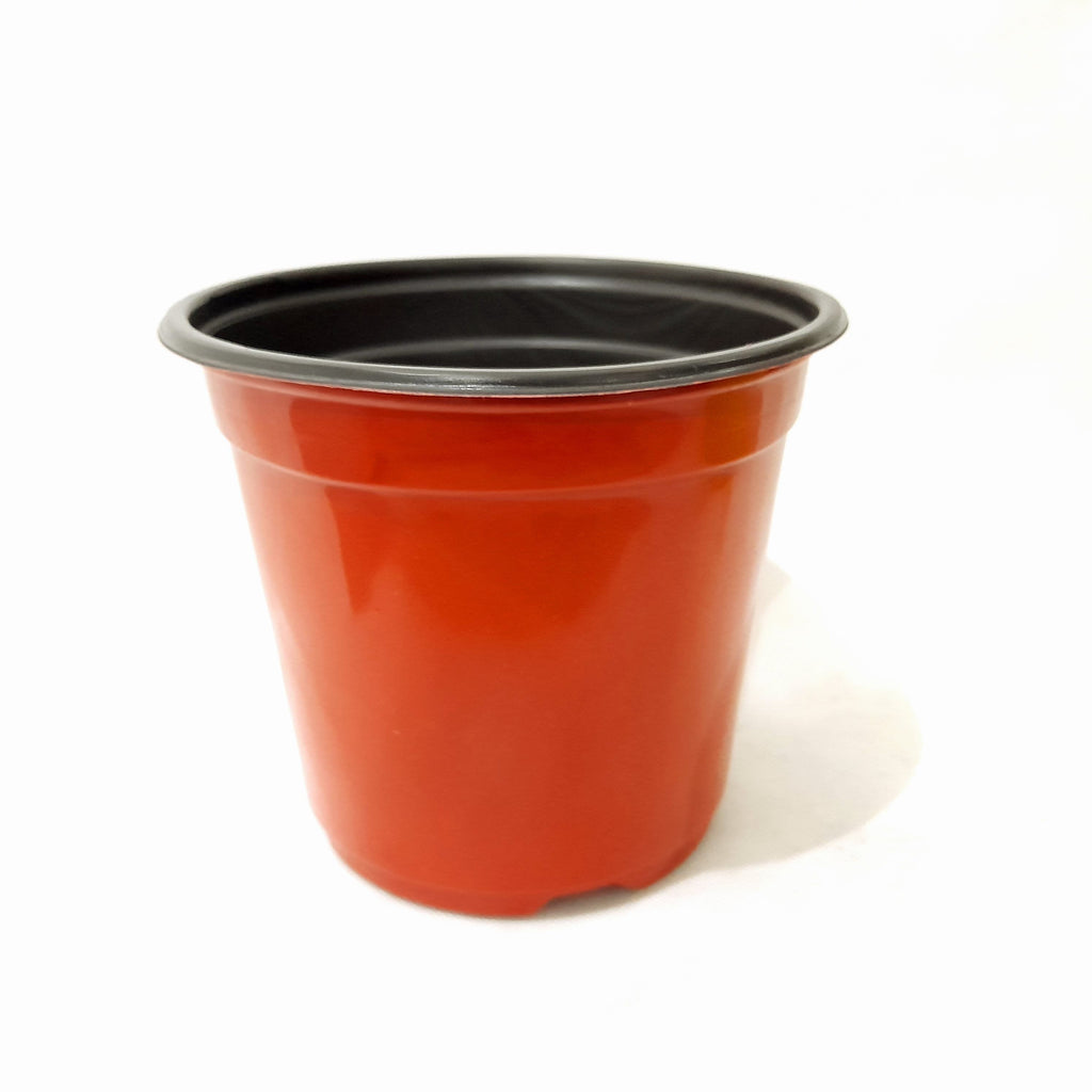 Red Flexi Pot,PVC Material,6 Inches Diameter (per piece) Homegrown: Fresh Food, Groceries, Plants and More!