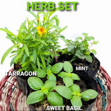 Herb Set, Included: Basil,Mint,Tarragon,3 Inches up,Tray not included (Total 3pcs) Homegrown: Fresh Food, Groceries, Plants and More!