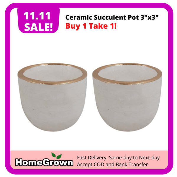 "11.11 Sale! Buy 1 Take 1, White Ceramic Succulent Pot 3""x3"" (Total 2 pots) Homegrown: Fresh Food, Groceries, Plants and More!"