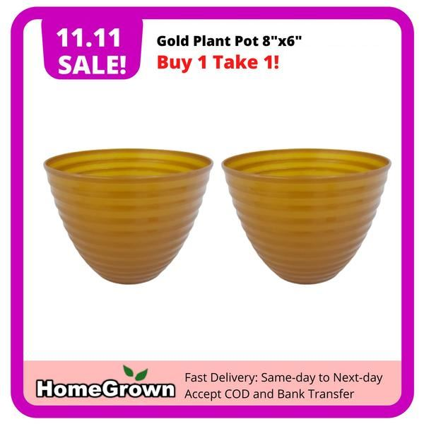 "11.11 Sale! Buy 1 Take 1, Gold Plastic Plant Pot, 8""x6"" (Total 2 pots) Homegrown: Fresh Food, Groceries, Plants and More!"