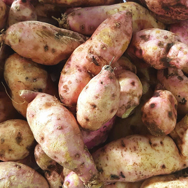 . Tier-2 Sweet Potato (per 500g) Homegrown Organics (The Home of Purple Corn) : No Minimum Order
