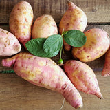 .                                        Organic Kamote Sweet Potato  (Per 500g)