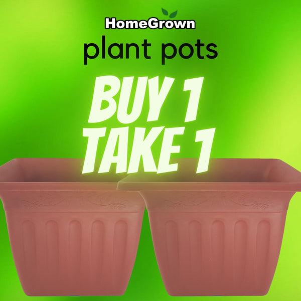 Promo B1T1! Buy 1 Take 1 ( total 2pcs) Homegrown Door-to-Door Fresh from the Farm Delivery