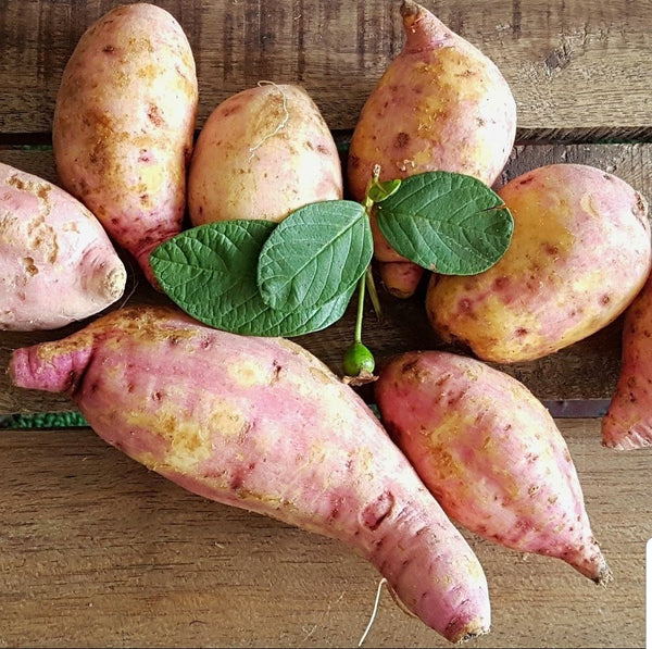 Kamote: Sweet Potato (500g) Homegrown Organics (The Home of Purple Corn) : No Minimum Order