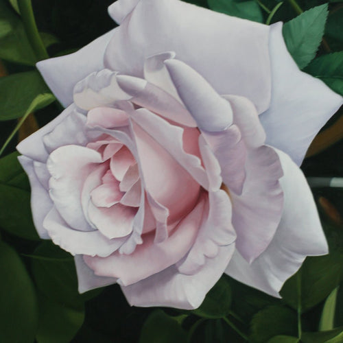 Rose, Miguel Angel Nuñez - A Life With Art