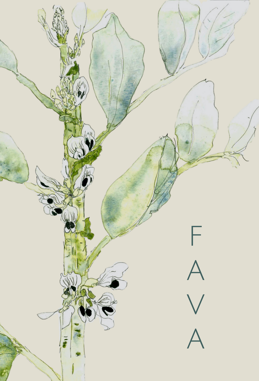 Fava greeting card