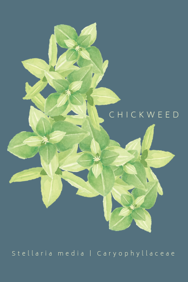 Chickweed Greeting Card
