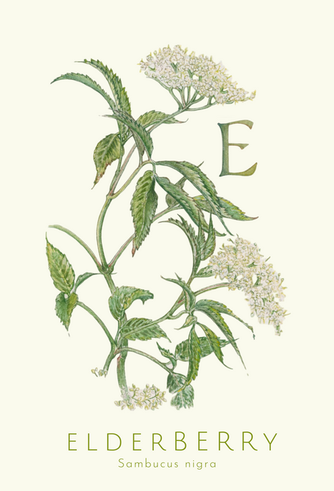 Elderberry greeting card