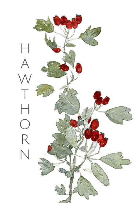 Hawthorn greeting card
