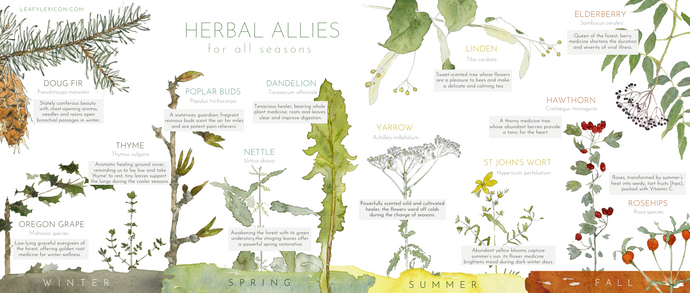 Herbal Allies for All Seasons—poster