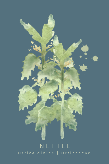 Nettle Greeting Card