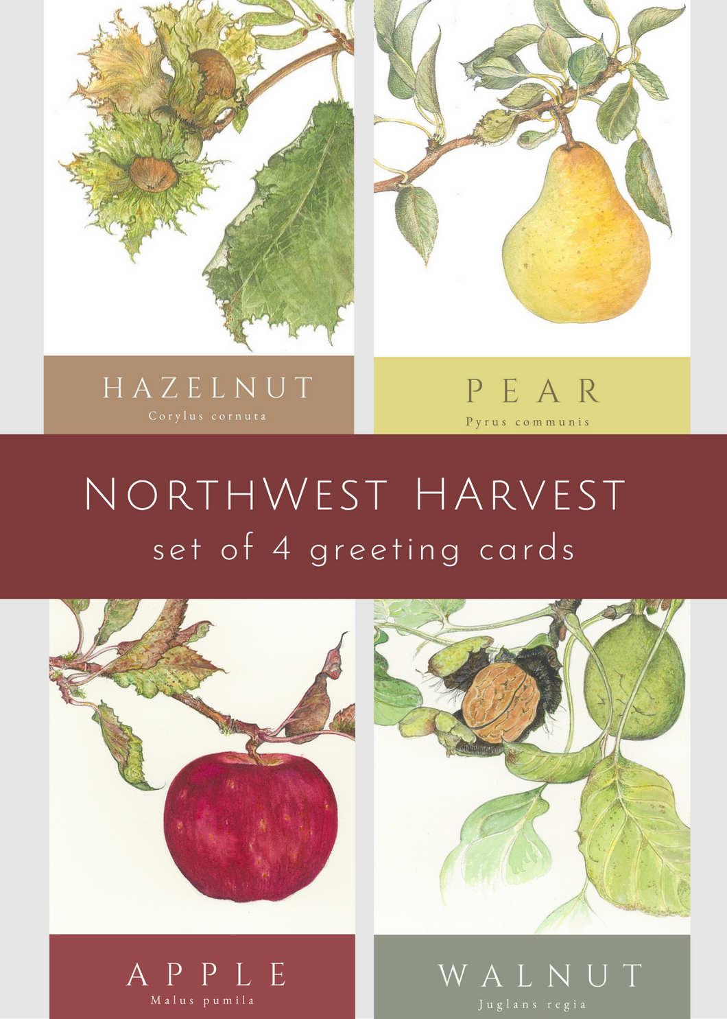 Northwest Harvest—set of 4