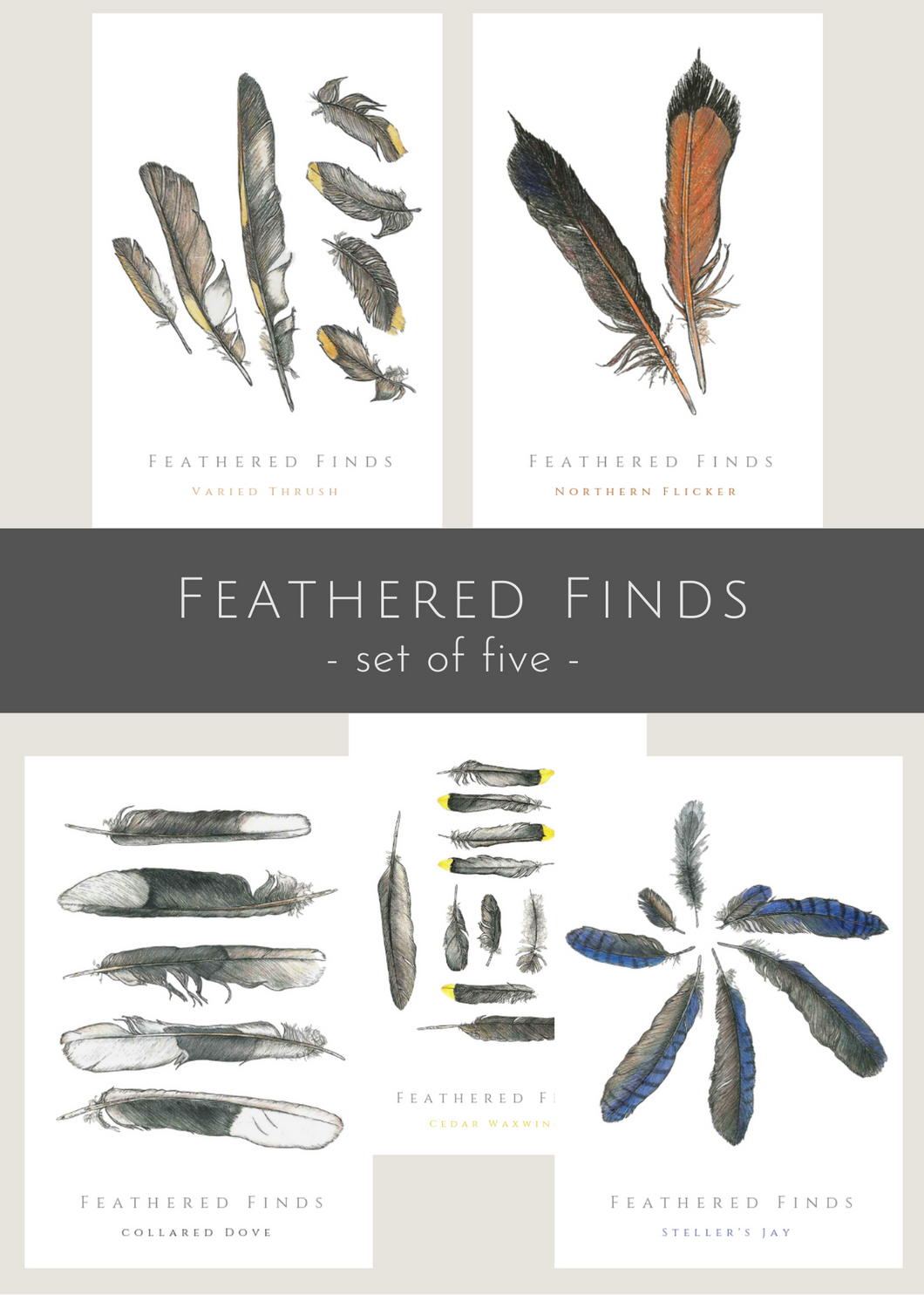 Collection of 5, Feathered Finds greeting cards