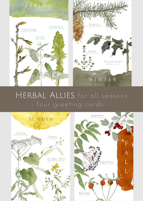 Herbal Allies, set of 4