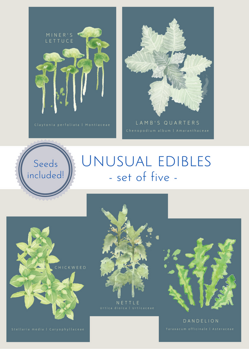 Unusual Edibles—set of 5