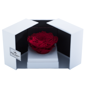Red Mega Preserved Rose | Swing Opening Box