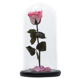 Pink Preserved Rose | Beauty and The Beast Glass Dome