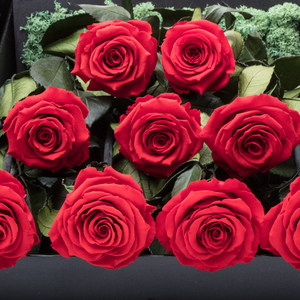 Sirius | 9 Long Stem Red Preserved Roses in Black Bouquet Box