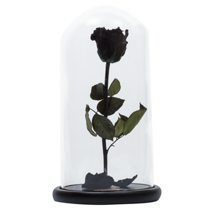 Black Preserved Rose | Beauty and The Beast Glass Dome