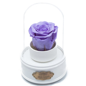PURPLE PRESERVED ROSE|THE ONLY REGULAR WHITE MUSIC GLOBE