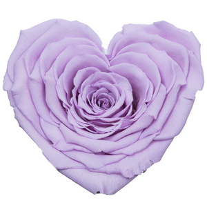 Purple Heart Shape Preserved Rose | Beauty and The Beast Glass Dome