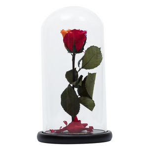 Rainbow Preserved Rose | Beauty and The Beast Glass Dome