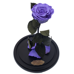 Purple Preserved Rose | Beauty and The Beast Glass Dome