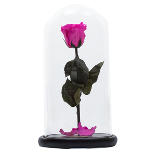 Hot Pink Preserved Rose | Beauty and The Beast Glass Dome
