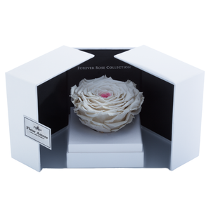White & Pink Mega Preserved Rose | Swing Opening Box