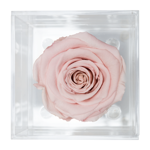 BABY PINK PRESERVED ROSE | PETITE ACRYLIC ROSE BOX