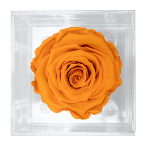 YELLOW PRESERVED ROSE | PETITE ACRYLIC ROSE BOX