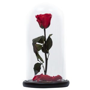Red Preserved Rose | Beauty and The Beast Glass Dome