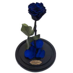 Royal Blue Preserved Rose | Beauty and The Beast Glass Dome