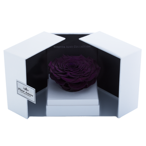 Dark Purple Mega Preserved Rose | Swing Opening Box